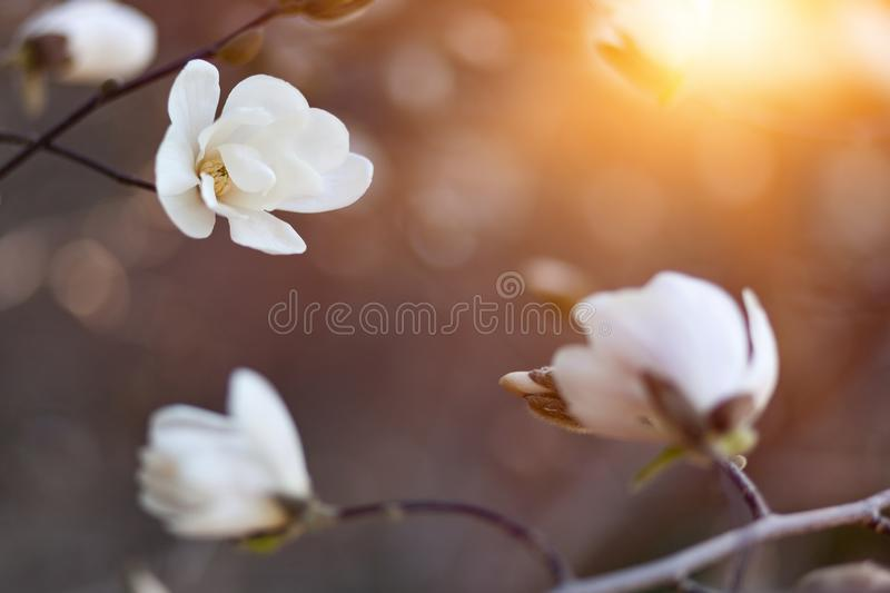Natural spring flower, many blooming beauty flowers stock photography