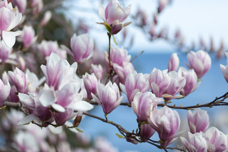 Natural spring flower, many blooming beauty flowers stock photos