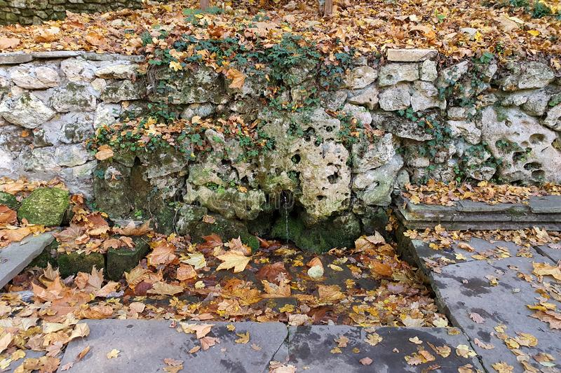 Natural spring water. moss and leaves, water flowing over rocks stock image