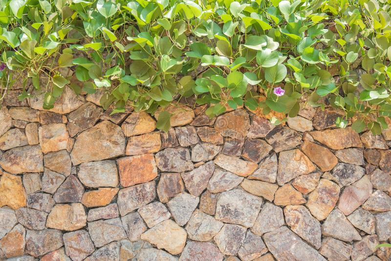natural stone wall and plants texture background stock images