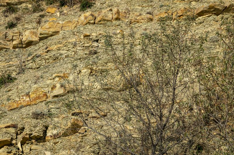 Natural stones and fragments of rocks with graceful plants on the mountain slopes near the Black Sea as an original and textural b stock photography