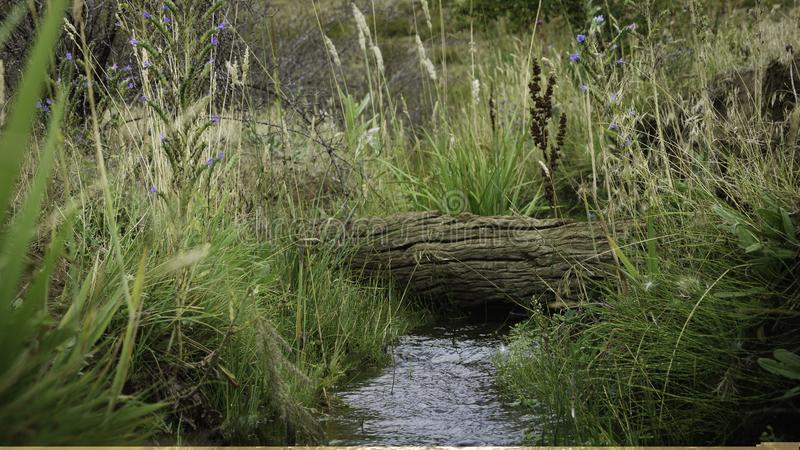 Natural stream surrounded by dense and wild vegetation. A trunk crosses the water. royalty free stock image