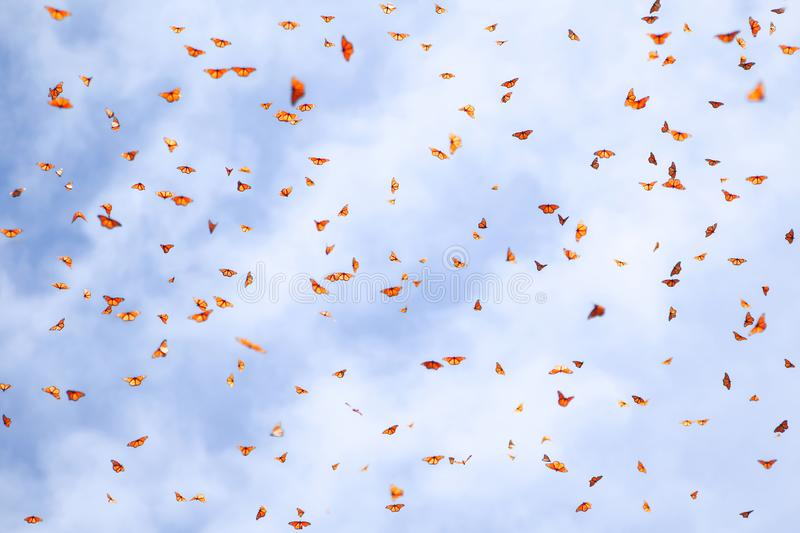 Natural summer background. Many monarch orange butterflies in a blue sky with clouds. royalty free stock photography