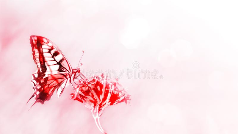 Natural summer background. Red butterfly on red flowers. stock photos