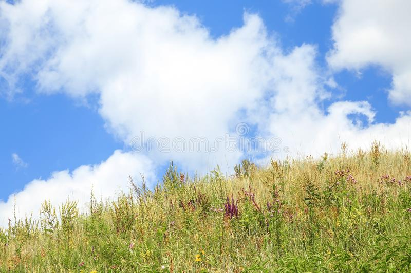 Natural summer floral background with a copy space with field and meadow flowers and herbs against a bright blue sky on a sunny royalty free stock photo