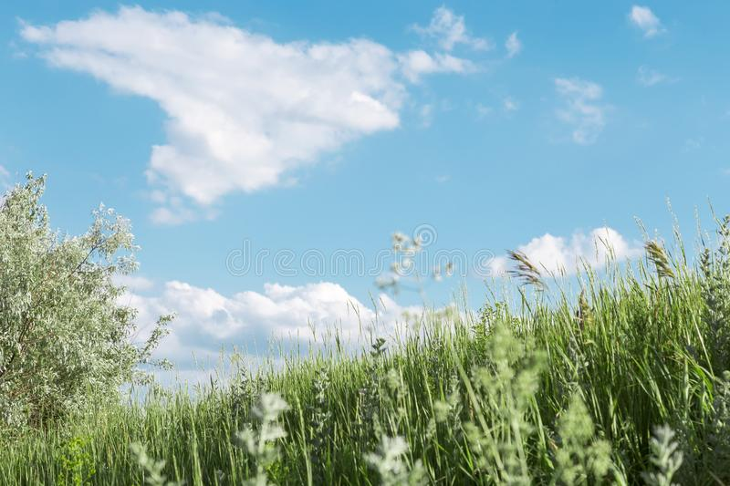 Natural summer floral background with a copy space with field and meadow herbs against a bright blue sky on a sunny day and warm royalty free stock images