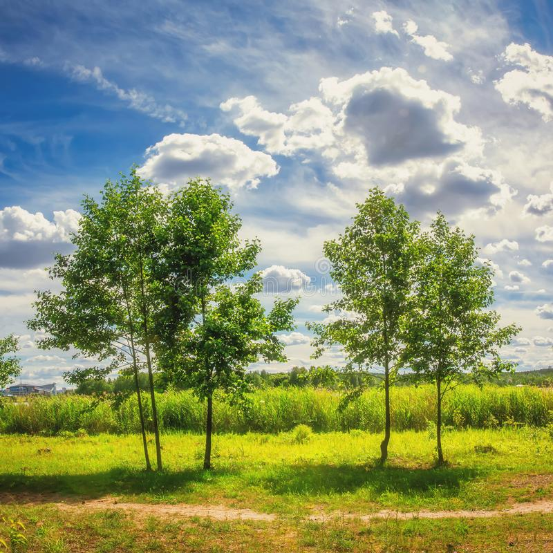 Natural summer landscape of green trees on a meadow against a cloudy blue sky in a bright sunny day. Nature in the open air royalty free stock photos