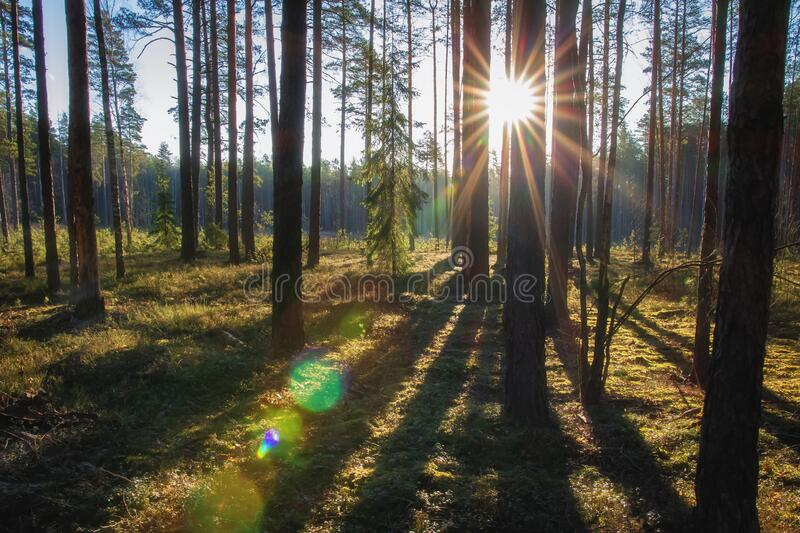 Summer forest with bright sun stock photos