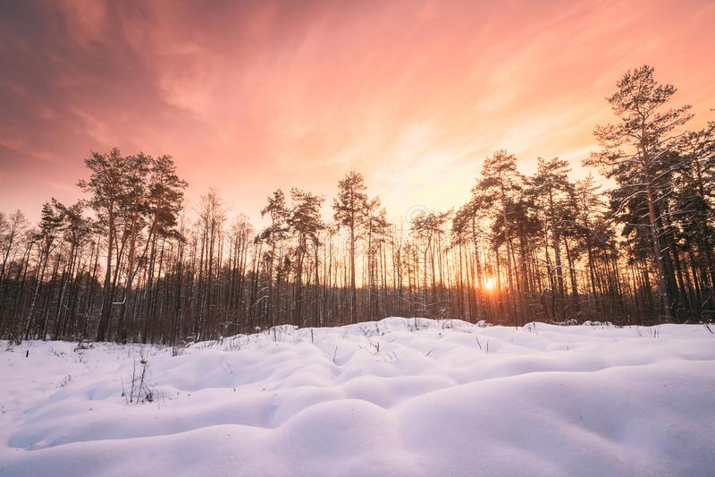 Natural Sunset Sunrise Over Forest. Pink Color Sky Over Winter Snowy Wood. Landscape Under Sky At Sunset Dawn Sunrise.  stock images