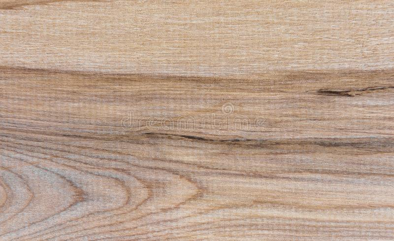 Natural Taiga birch wood grain texture pattern background. Taiga birch wood grain texture pattern background royalty free stock photo