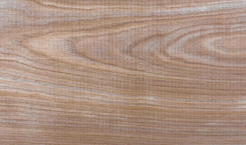Natural Taiga birch wood grain texture pattern background. Taiga birch wood grain texture pattern background royalty free stock photography