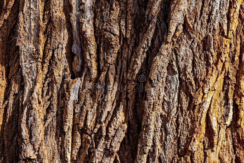 Natural Texture Background, Tree Bark from an Old Growth Oak Tree royalty free stock image