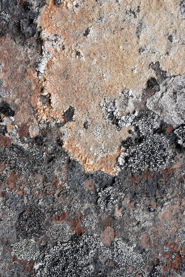 Natural texture of lichen on rock surface royalty free stock image