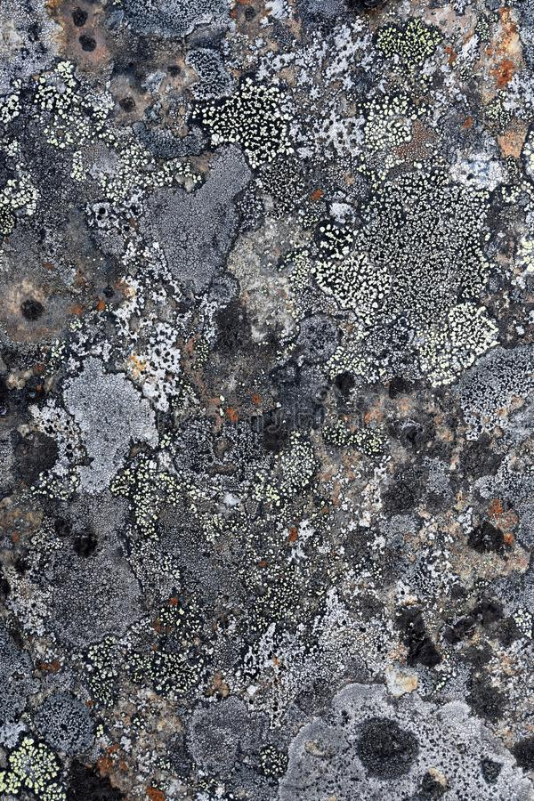 Natural texture of lichen on rock surface stock photography