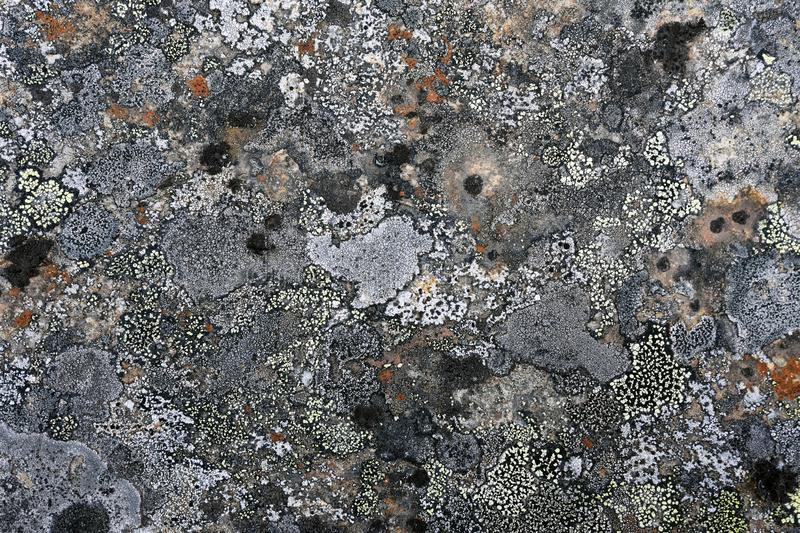 Natural texture of lichen on rock surface royalty free stock photo