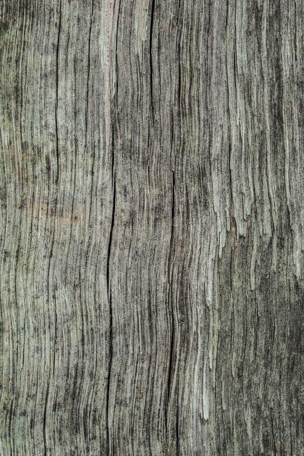 Natural texture stock image