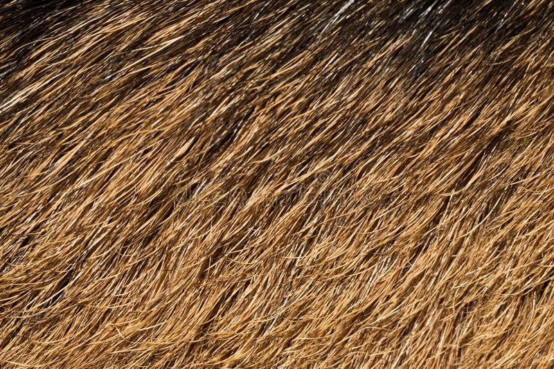 Natural texture of wild deer skins. Animal macrophotography royalty free stock image