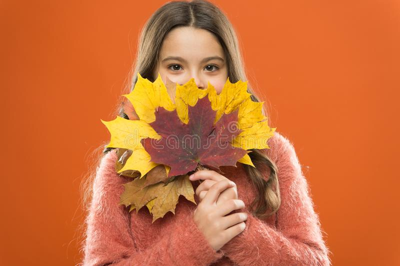 Natural treasures. Changes in nature. Cute happy smiling kid playing with leaves. Fall symbol. Happy little girl with. Maple leaves. Small child hold autumn stock photos