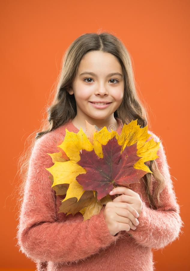 Natural treasures. Collecting leaves. Changes in nature. Cute happy smiling kid playing with leaves. Fall symbol. Happy. Little girl with maple leaves. Small royalty free stock photo