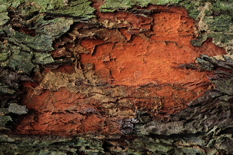Natural tree bark damage background royalty free stock photography