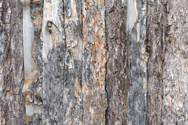 Natural tree bark plank texture background. Natural tree bark plank texture. Untreated rustic wood background, rough timber plant surface. Weathered grunge stock photo