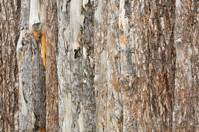 Natural tree bark plank texture background royalty free stock image