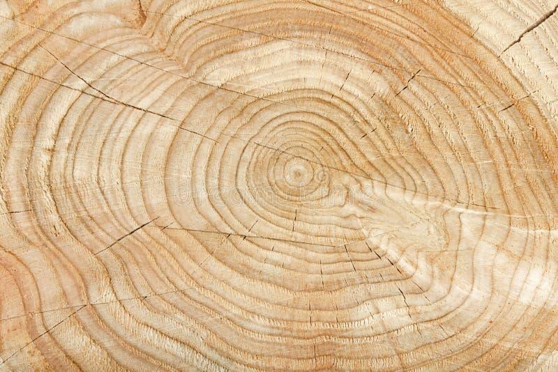 Natural tree pattern stock photo