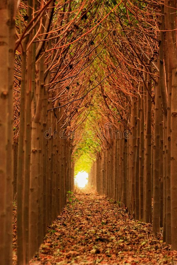 Natural tree tunnel stock photography