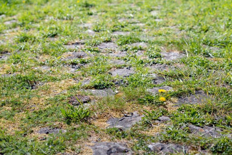 Natural vegetation between cobblestones stock photo