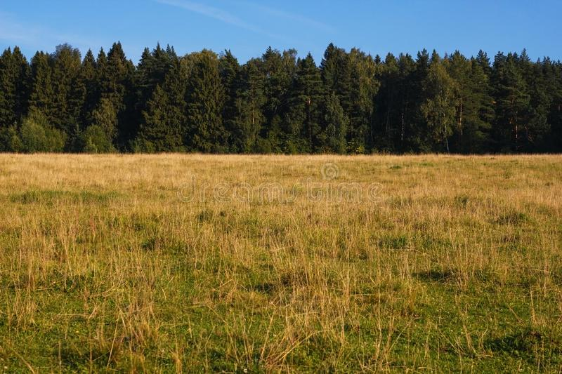 Natural view of the field with yellow grass on the background of green forest and blue sky on a Sunny day. The perfect landscape royalty free stock images