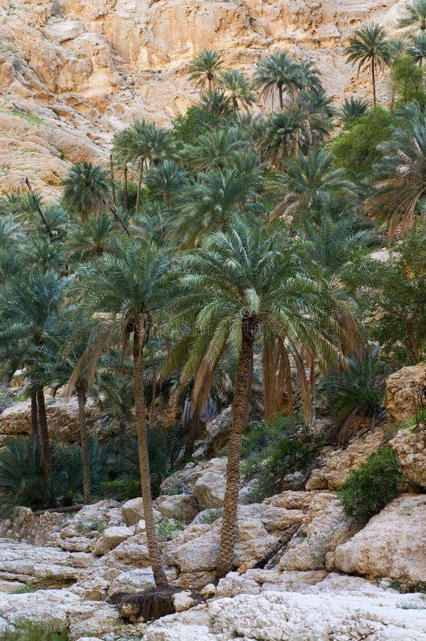 A natural wadi in Oman stock photography