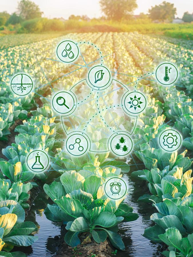 Natural watering of agriculture. High technologies and innovations in agro-industry. Study quality of soil and crop. Scientific. Work and development of new royalty free stock photos
