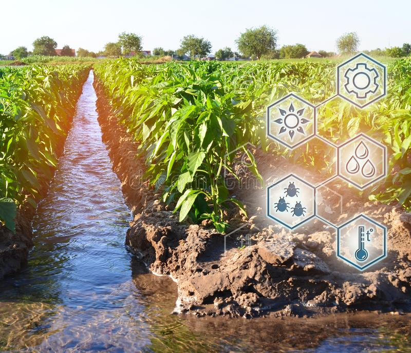 Natural watering of agriculture. High technologies and innovations in agro-industry. Study quality of soil and crop. Scientific. Work and development of new stock photos