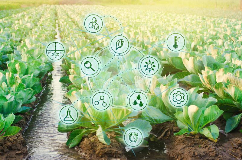 Natural watering of agriculture. High technologies and innovations in agro-industry. Study quality of soil and crop. Scientific. Work and development of new stock images