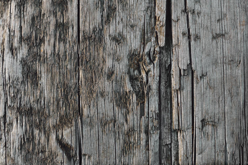 Natural Weathered Grey Tan Taupe Wooden Board, Cracked Ruined Rough Cut Sepia Wood Texture, Large Detailed Old Aged Gray Lumber. Background Horizontal Macro royalty free stock images
