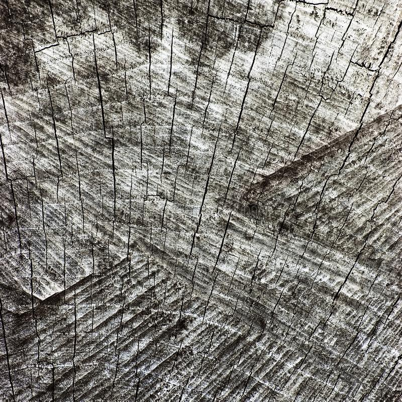 Natural Weathered Grey Tree Stump Cut Texture, Large Detailed Old Aged Gray Lumber Background Macro Closeup, Dark Black Cracked. Natural Weathered Grey Tree royalty free stock photos