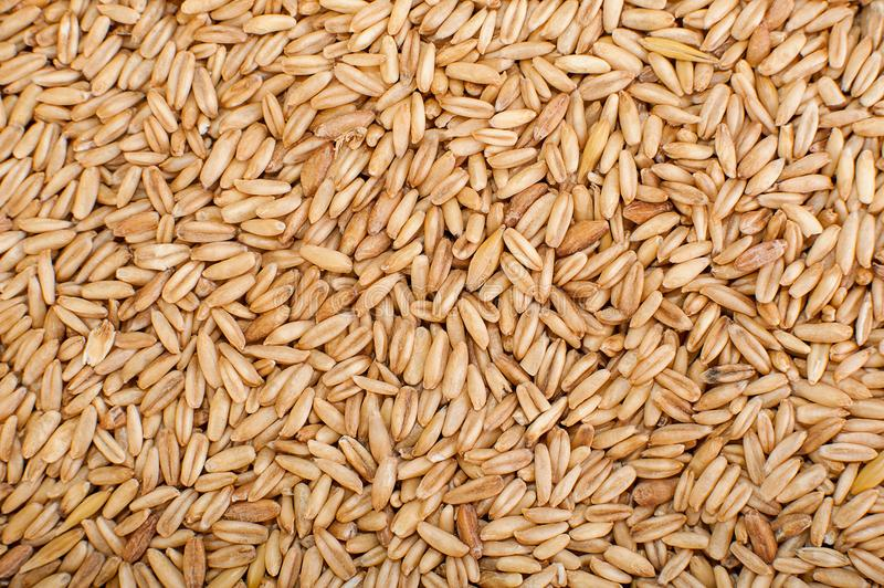 Natural Wheat Grains background, closeup royalty free stock image
