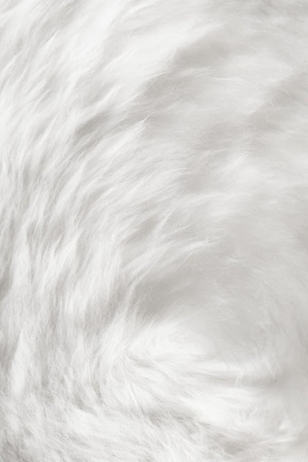 Natural white fur background stock image image of for Fur wallpaper tumblr