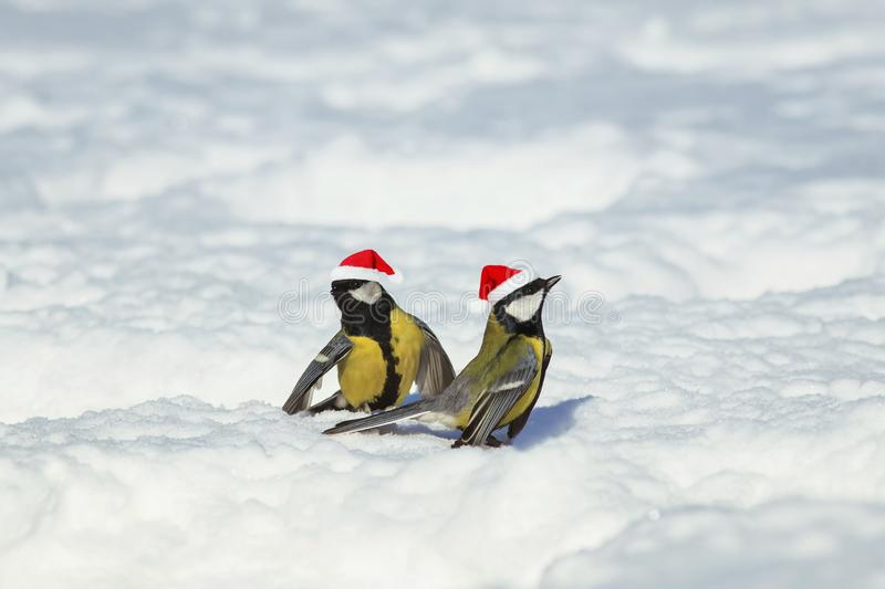 Natural winter background with beautiful funny Birds tits in the. New Year`s red caps importantly walking through the snow in the park royalty free stock images