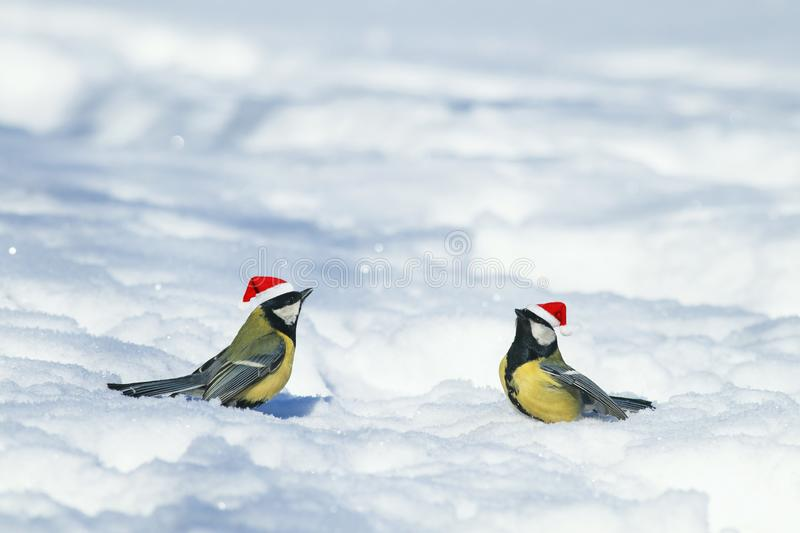 Natural winter background with beautiful funny Birds tits in th. E New Year`s red caps importantly walking through the snow in the park stock image