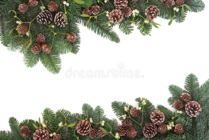 spruce and mistletoe relationship