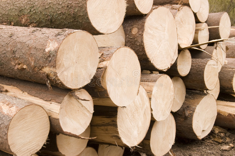 Natural wood. Details pile of wood, storage stock photo