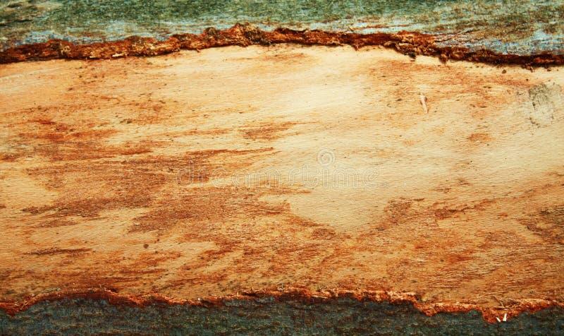 Natural wood bark frame royalty free stock image