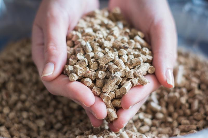 Natural wood pellet for heating in women`s hands, bio fuel royalty free stock images