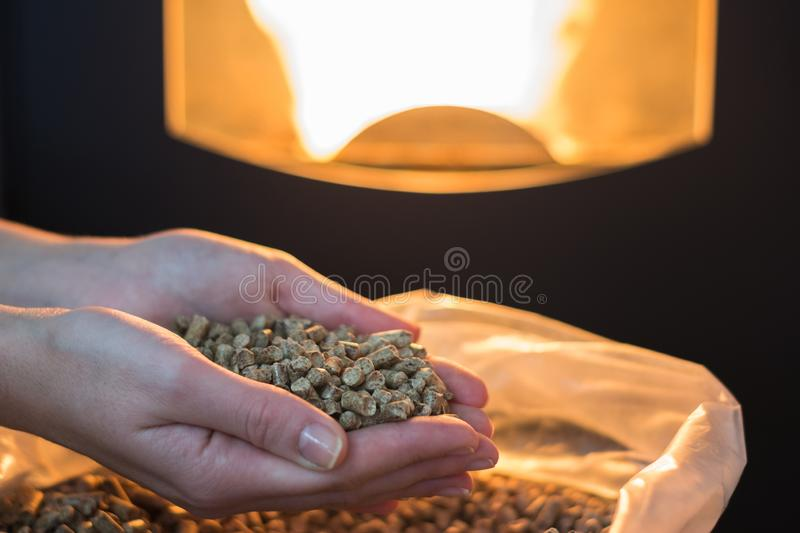 Natural wood pellet for heating in women`s hands, bio fuel. Heap of natural wood pellet for heating in women`s hands. Eco energy concept, bio fuel stock images