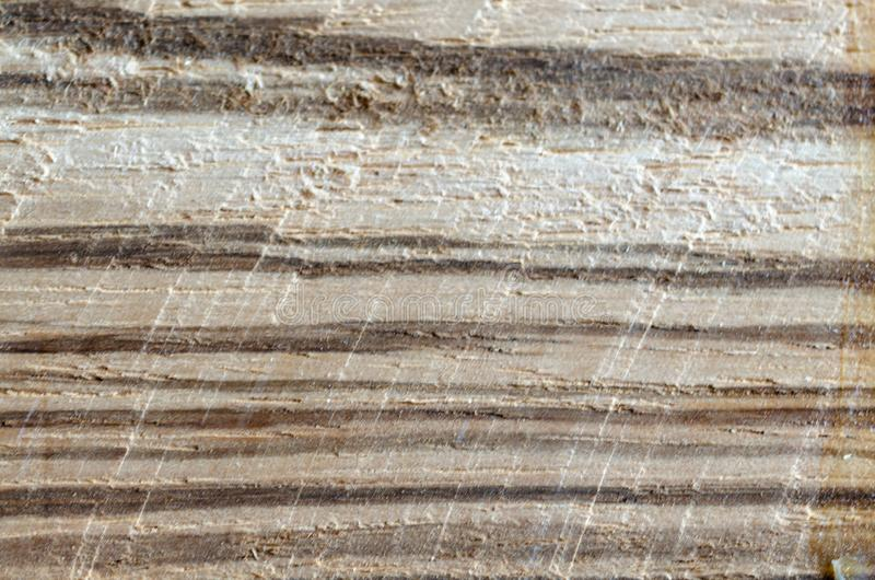 Natural wood texture closeup. Tree cut background. Wood working, timber processing.  stock photo