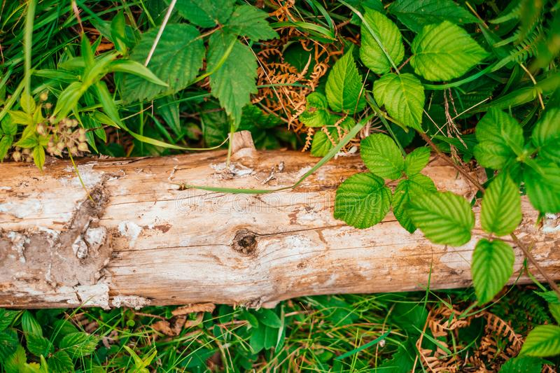 Natural wooden bark texture royalty free stock images