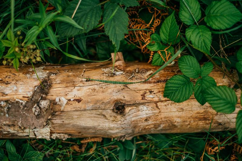 Natural wooden bark texture royalty free stock photography