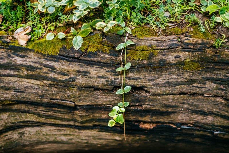 Natural wooden bark texture stock image