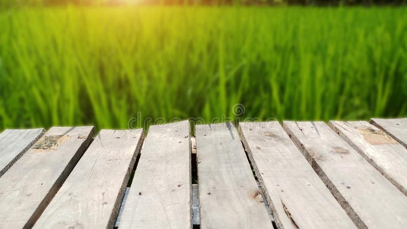 Natural wooden bridge with green rice field and sunrise background stock image
